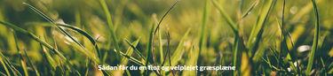 velplejet græsplæne