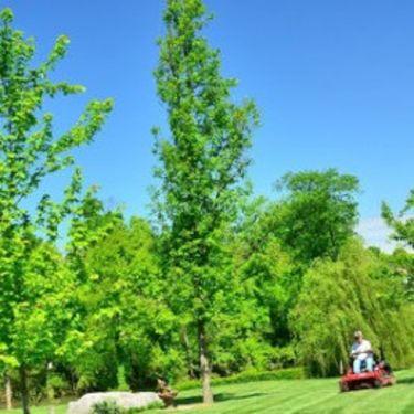 gør græsplænen forårsklar