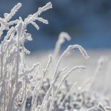 gør græsplænen vinterklar